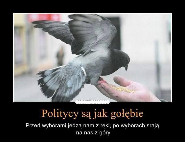 http://www.zgierz.pun.pl/_fora/zgierz/gallery/12_1425475224.jpg