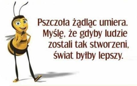 http://www.zgierz.pun.pl/_fora/zgierz/gallery/27_1468382550.jpg